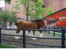 Пивные кони Будвайзер